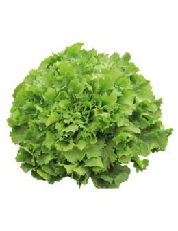 Delivery verduras achicoria a domicilio